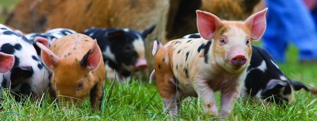 (c) Canecreekfarm.us