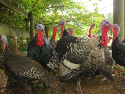 turkeysgreen
