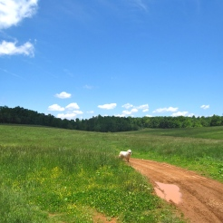 Zeus in the pasture