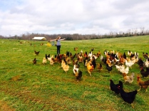 The chickens love Enid